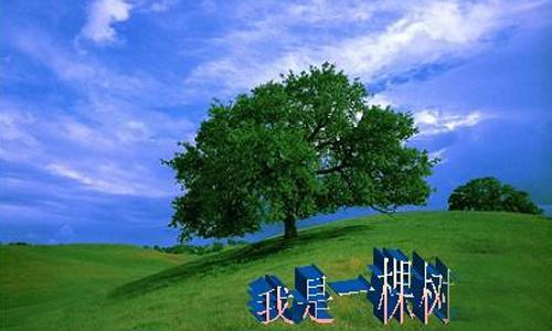 假如我是一棵树,我生长在一个美丽的大城市