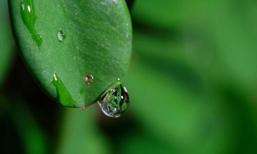 一滴水图片图片
