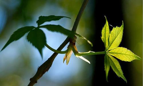 假如一朵美丽的鲜花失去了叶子,花就会快速的干枯.图片