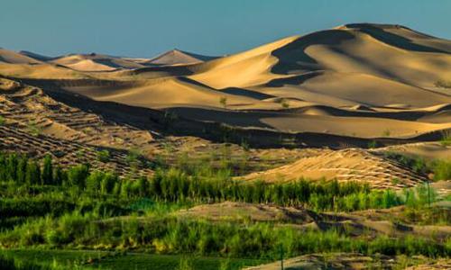 沙漠變綠洲作文350字