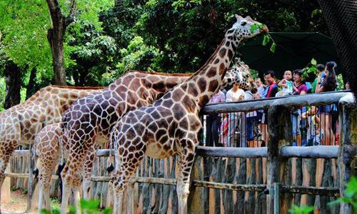 第一次去动物园作文