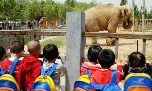 参观动物园作文600字