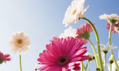鲜花的开放时间以及比喻句
