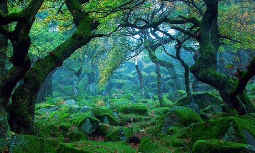 大森林作文300字图片