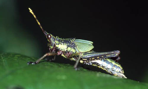 介绍昆虫标本作文