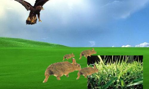 维护生态平衡作文   数量有许多的害虫