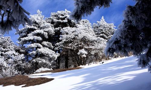六年级描写冬天黄山的作文