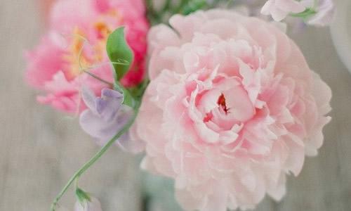 壁纸 花 花束 鲜花 桌面 500_300