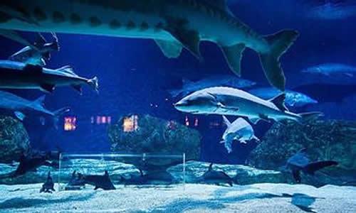 上海海洋馆一日游作文
