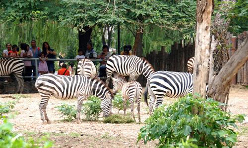 北京动物园一日游作文