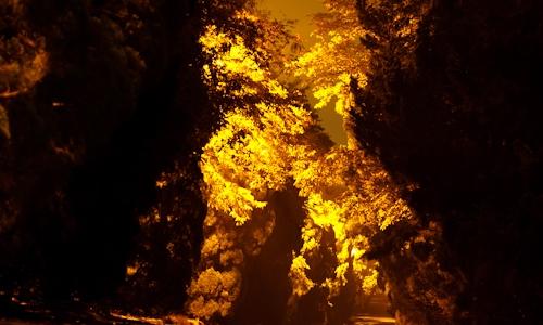 描写秋天夜景的作文300字
