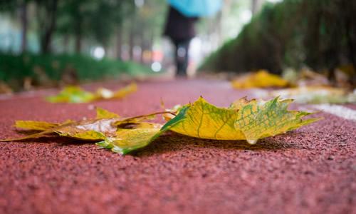 高中关于秋雨的作文