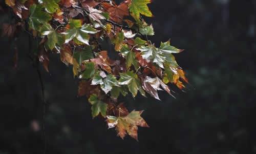 初一关于秋雨的作文
