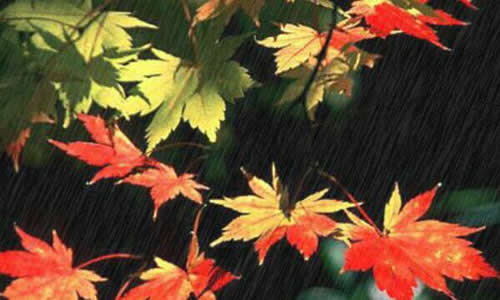 四年级关于秋雨的作文
