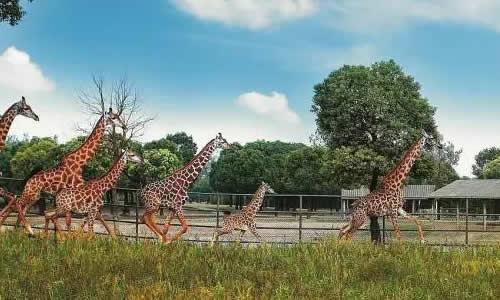 参观野生动物园作文