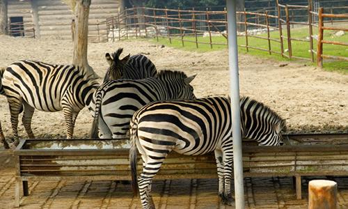 参观动物园作文200字