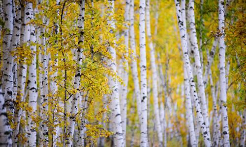 秋天在小动物眼里是冬天要到来的信号,在我眼里秋天是一个快乐的