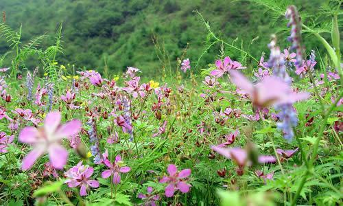 春天的作文450字   小树林在人们的眼里是风景优美的地方,但在小动物