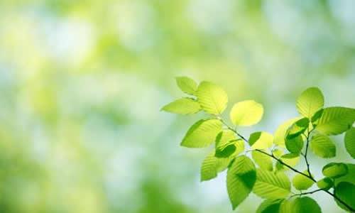 桌面壁纸带绿叶