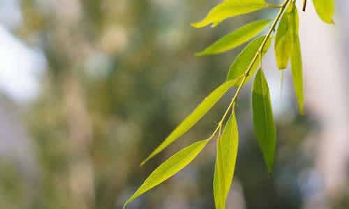 > 秋天的柳叶作文   一阵微风吹来,我的头发随风飞舞,手中落叶也随风