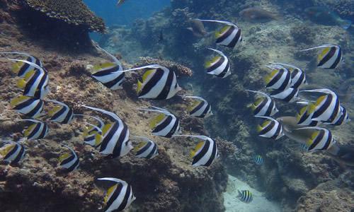 分界洲岛潜水作文500字