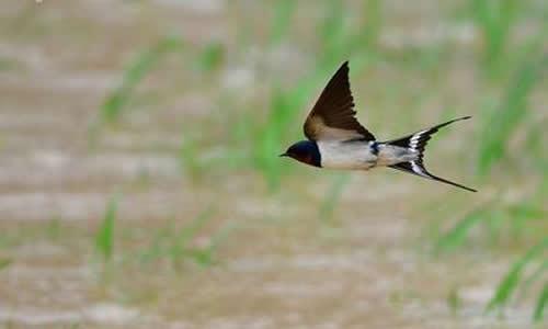 4.一只活泼可爱的小燕子在天空中飞翔.         5.