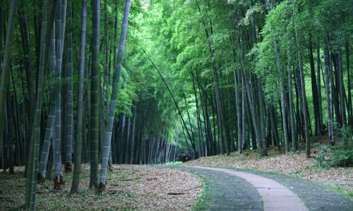 安阳洹园的竹林作文图片