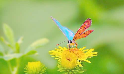 我在天空中自由地飞翔,蓝色的翅膀在阳光下闪闪发光.
