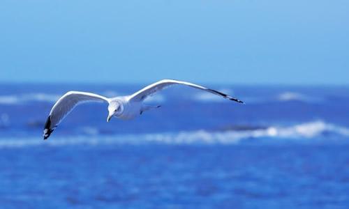 海鸥飞过海面扩句
