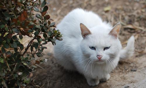 描写动物作文 我和流浪猫