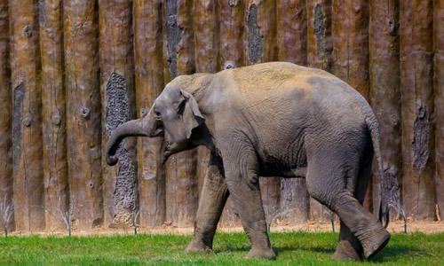 大象 动物 500_300