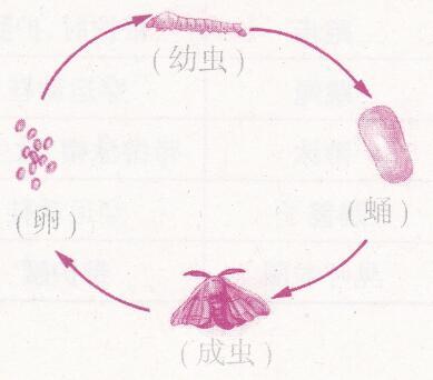 苏教版四下册年级单元2视频养蚕经验交流两怎样科学美颜图片